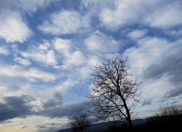 drvo-i-oblaci.jpg