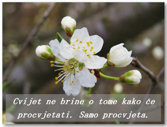 Cvijet samo cvjeta